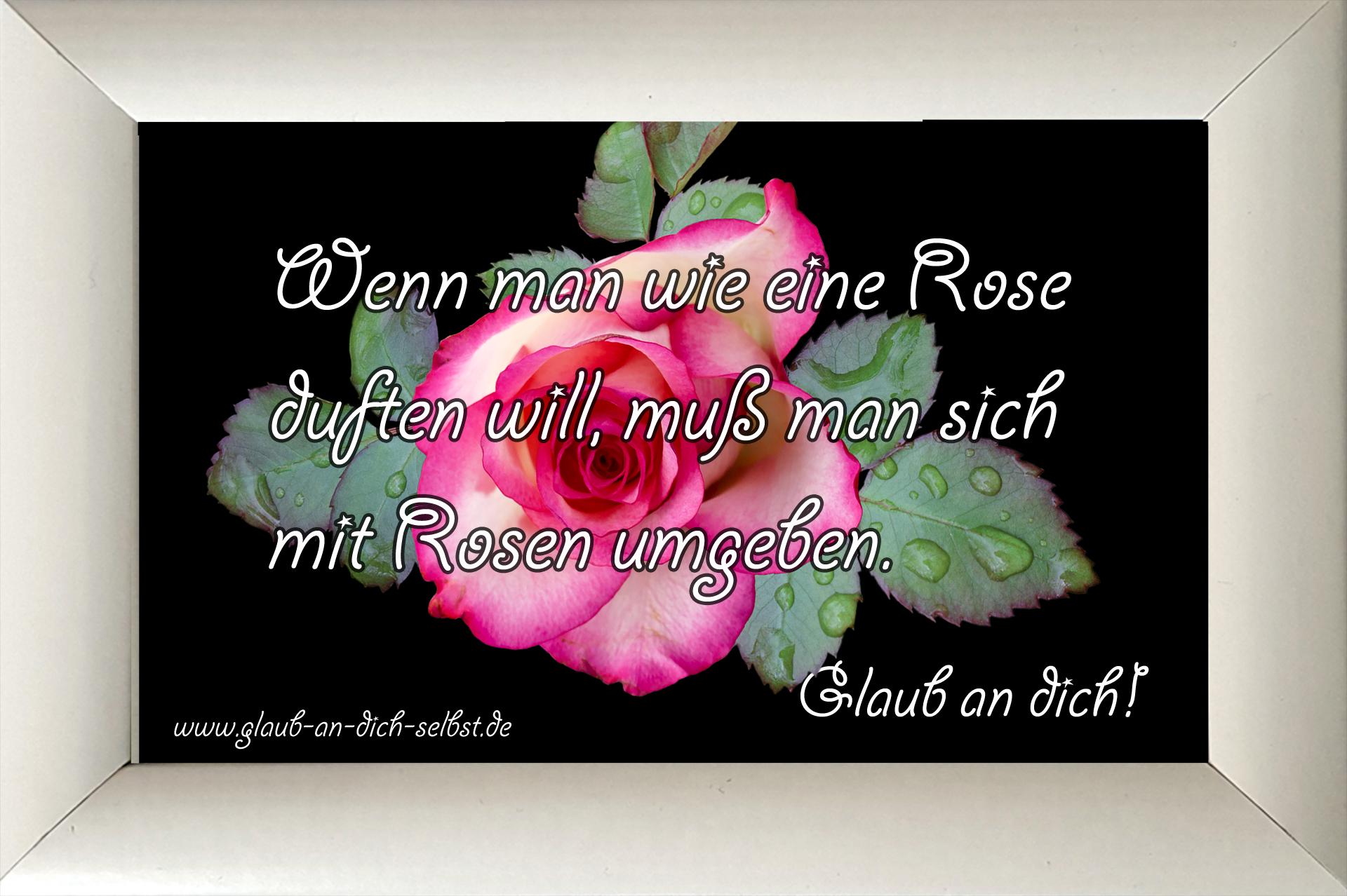 wenn man wie eine rose duften will mu man sich mit rosen umgeben glaub an dich 365 tage. Black Bedroom Furniture Sets. Home Design Ideas